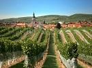 2. Malokarpatská vinohradnícka oblasť